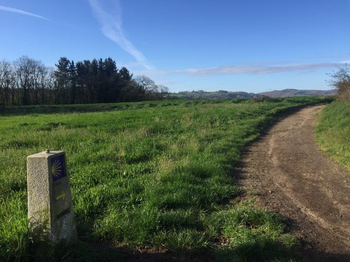Sarria path picture